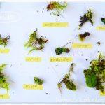 【苔図鑑】見つけた苔の種類・名前を知りたい方向け!