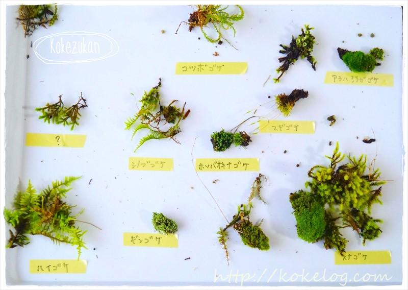 苔図鑑~身近な苔を知ろう~