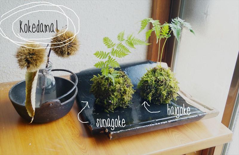 苔玉の作り方!簡単に作れて長く育てるコツとは?