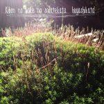 基本の苔の育て方・増やし方
