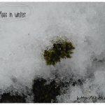冬の苔の育て方~茶色く干からびた苔を復活させる方法とは?
