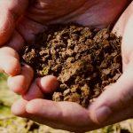 【まとめ】苔玉や苔テラリウムの土台、「土」の正しい選び方!