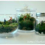 小さな森、苔テラリウムはガラスの容器だけ?容器選びのポイント