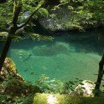 まるで屋久島?!隠れスポットな苔の森歩きを楽しみませんか?