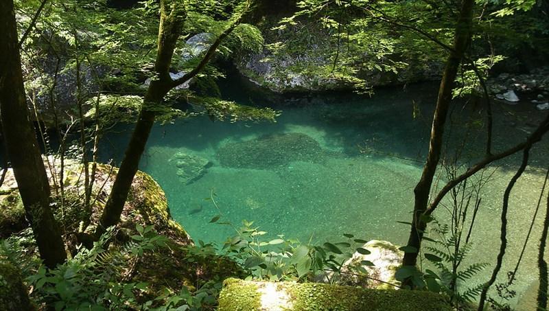 奈良県川上村の苔歩き紹介