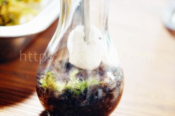 苔テラリウム内側の水分を拭き取る