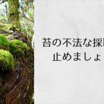苔の不法な採取は止めましょう