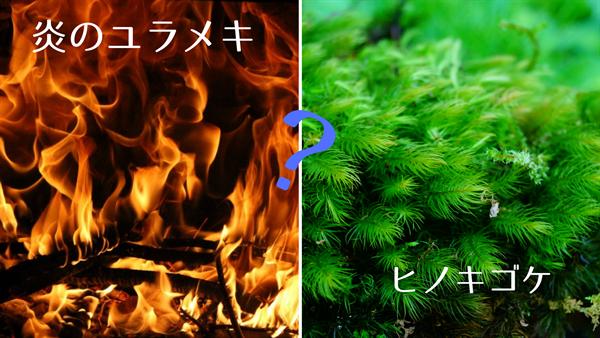 炎のゆらめきとヒノキゴケ