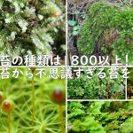 日本に苔の種類は1800以上!身近な苔から不思議すぎる苔をご紹介!