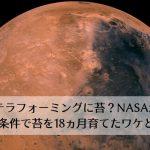火星テラフォーミングは苔が候補?火星と同じ環境で18ヵ月の生育に成功