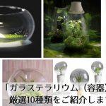 苔テラリウムを魅せる、美しき「ガラステラリウム(容器)」の世界。厳選10種