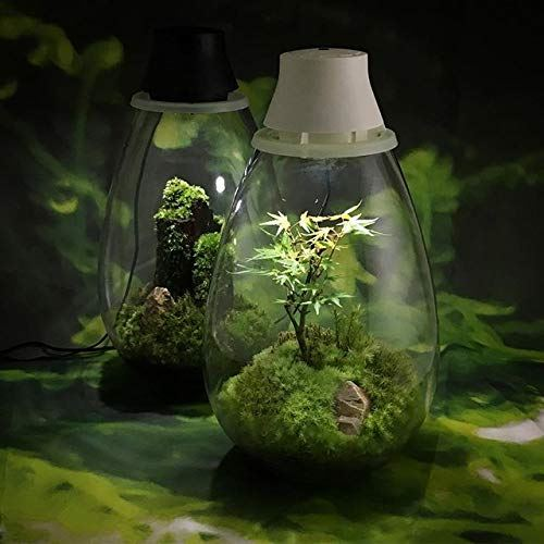 moss light