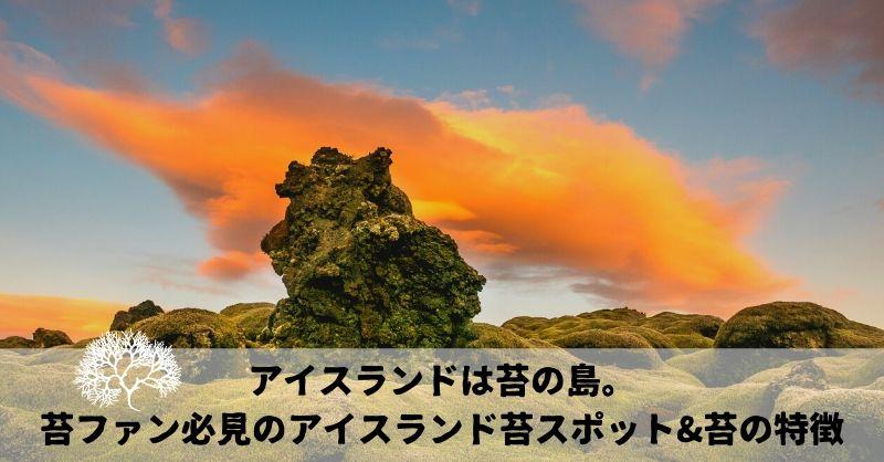 まさに苔の島・・・!苔ファンの聖地【アイスランド】の絶景苔スポットと「苔茶」