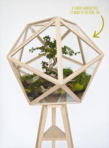 icosahedron-terrarium